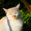 IMG_1227修善寺の猫