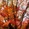 我、秋を放つ。