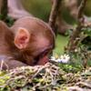 funky monkey baby