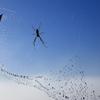 雲の上の蜘蛛