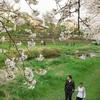 桜とインターナショナルカップル