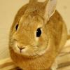 ウサギさん