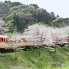 桜の中を駆け抜ける