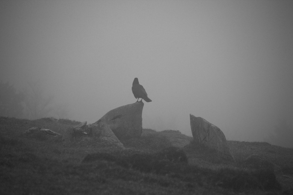 霧の中の鴉