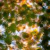 秋のざわめき