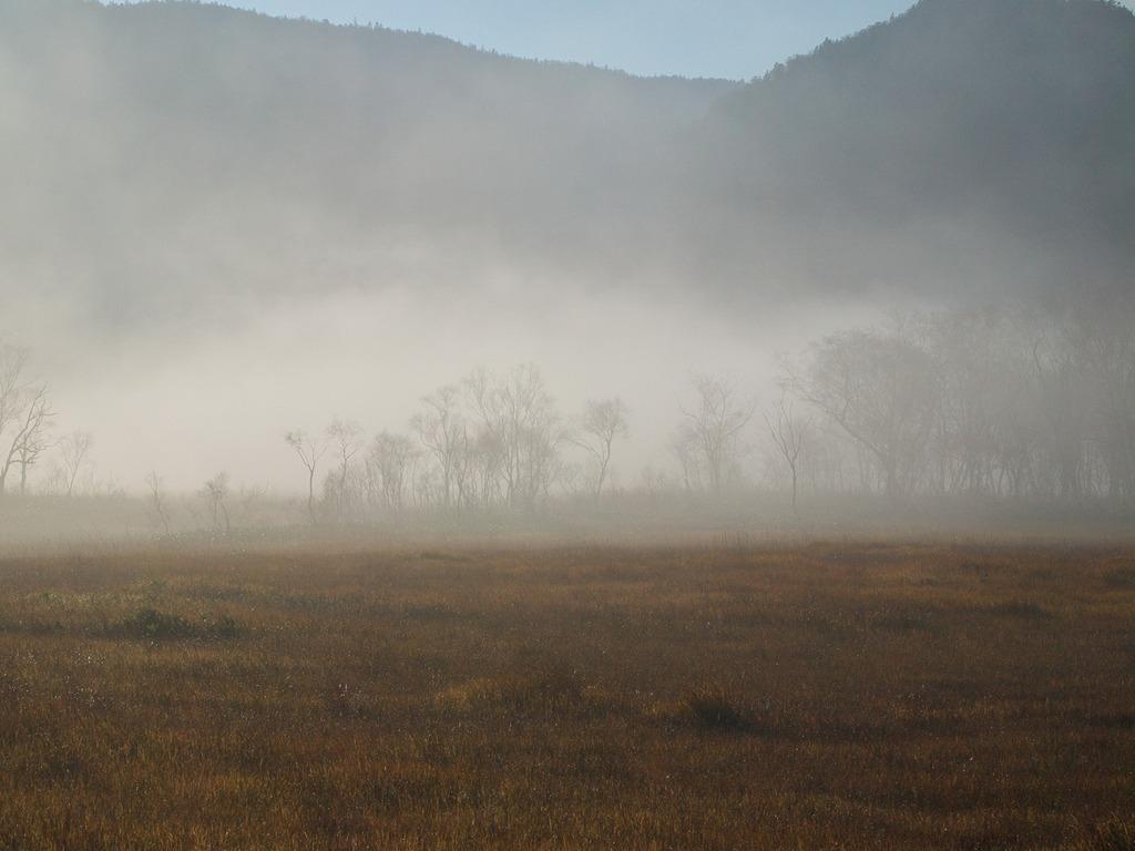 朝霧の尾瀬ヶ原ー霧の中に浮かび来る2