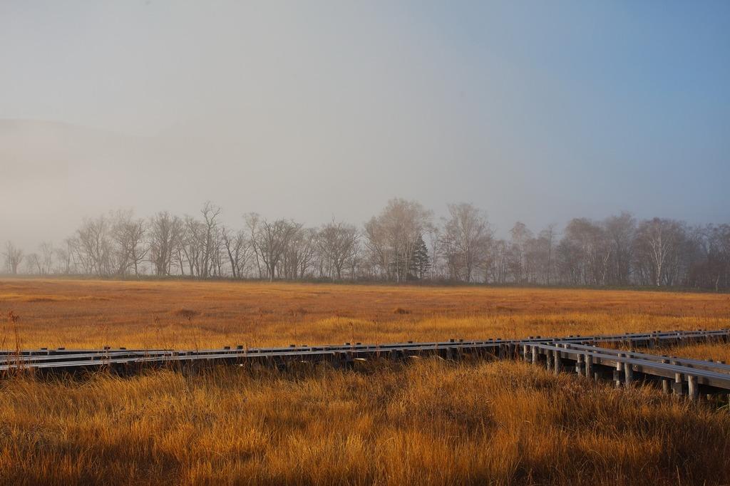 朝霧の尾瀬ヶ原(浮かび来る林)