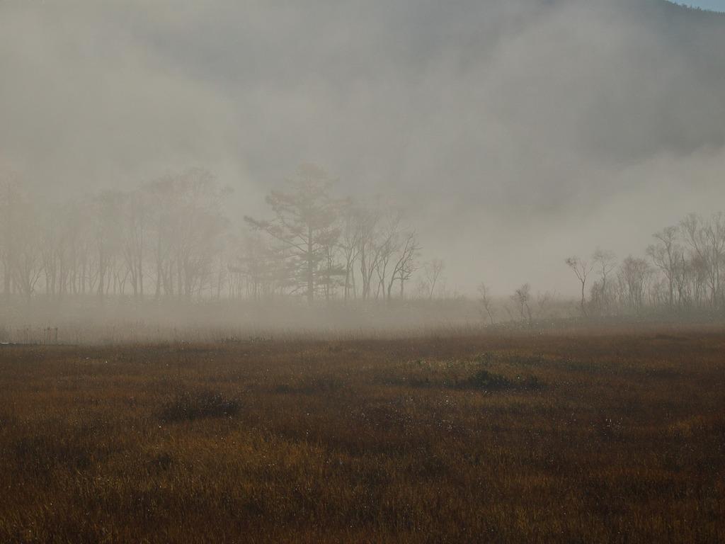 朝霧の尾瀬ヶ原ー霧の中に浮かび来る