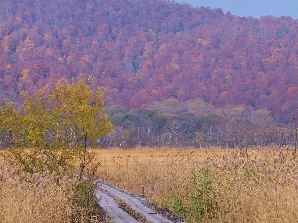晩秋の尾瀬ヶ原ー枯れ野2