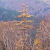 晩秋の尾瀬ヶ原ー至仏山を背景に