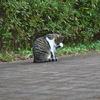 野良猫007