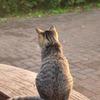 野良猫017