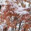 ひと足早い雪の日