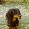 実家の愛犬ルナ