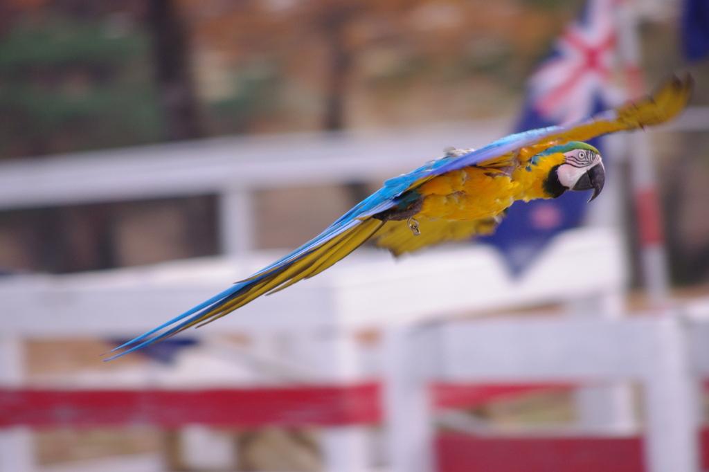 翔ぶオウム