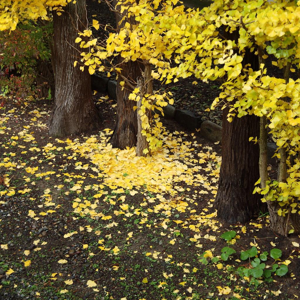 我が家の秋(3)