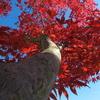我が家の秋(1)