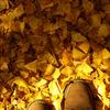 木漏れ日と靴