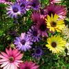色とりどりの春