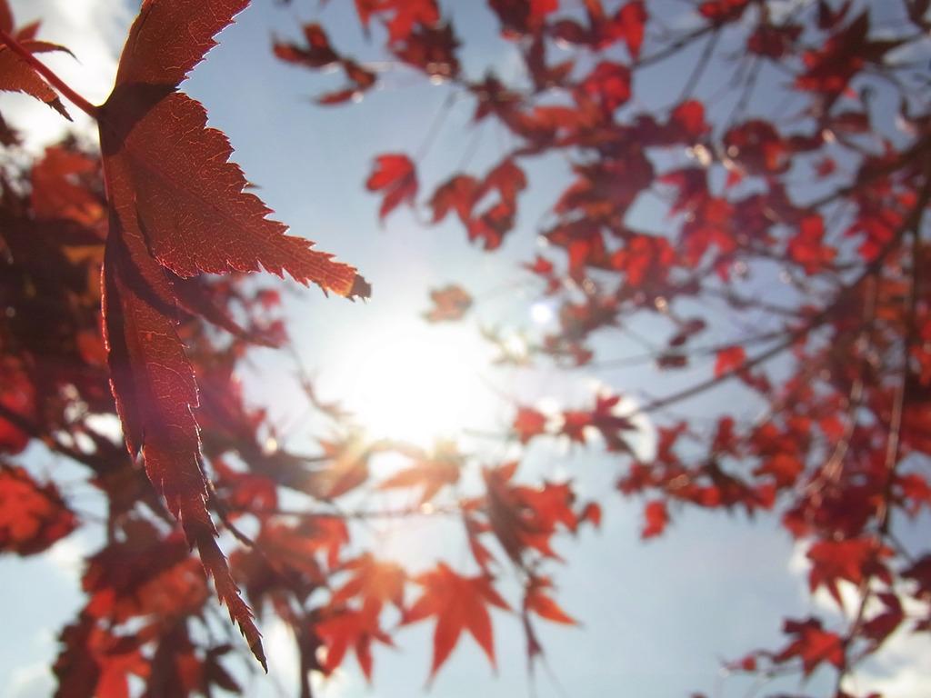 もみじと太陽