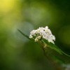 景信山の花