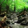浅川の源流