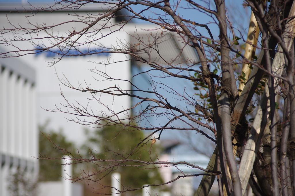 葉っぱ無の樹木1