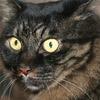 パーマ屋さんの猫