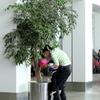 植木に水をあげよう