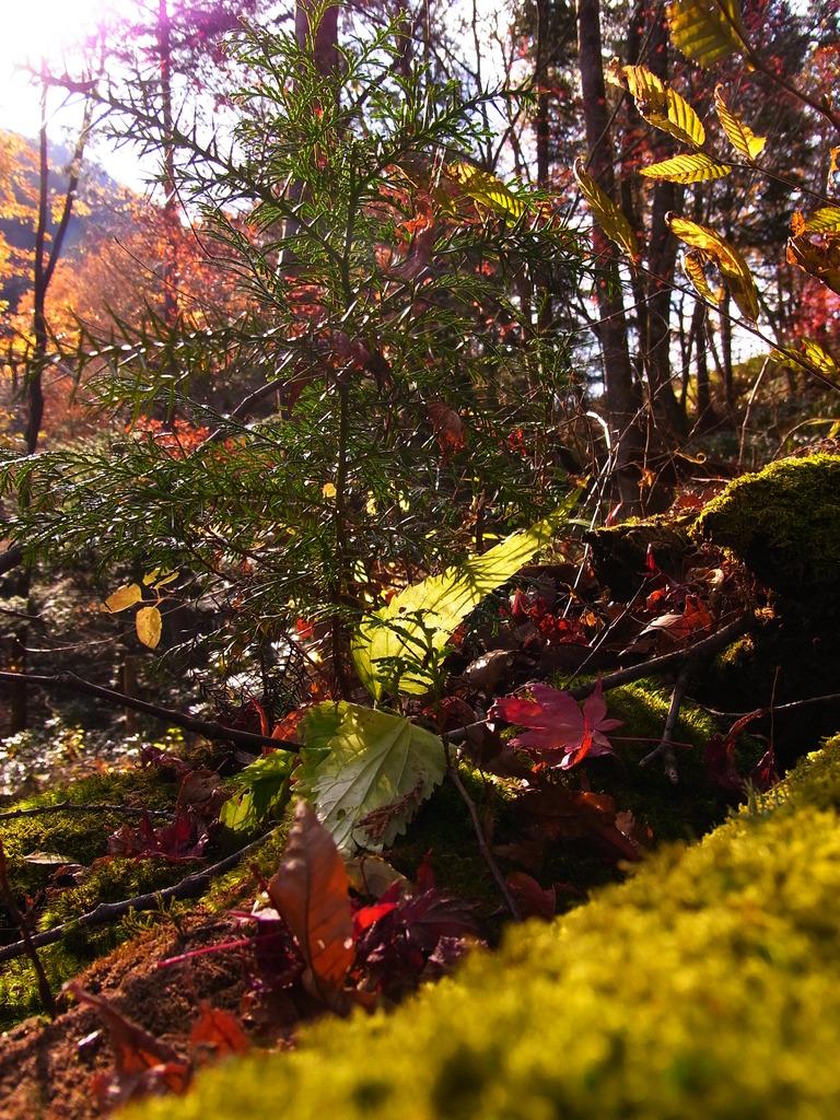 秋が終わる