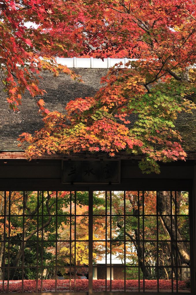 雲仙の紅葉