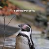 ペンギン・ポートレート