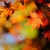 秋の暖かさ