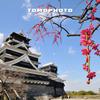 紅梅と熊本城