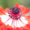 花の中心7