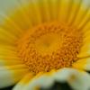 花の中心4
