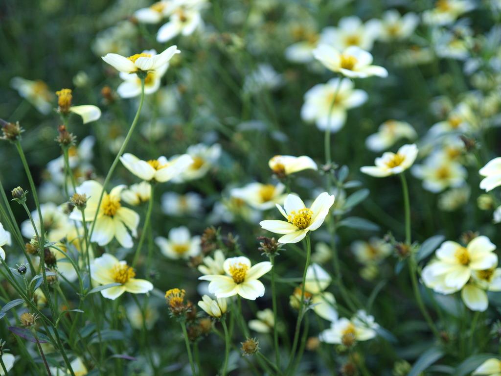 やわらかな花