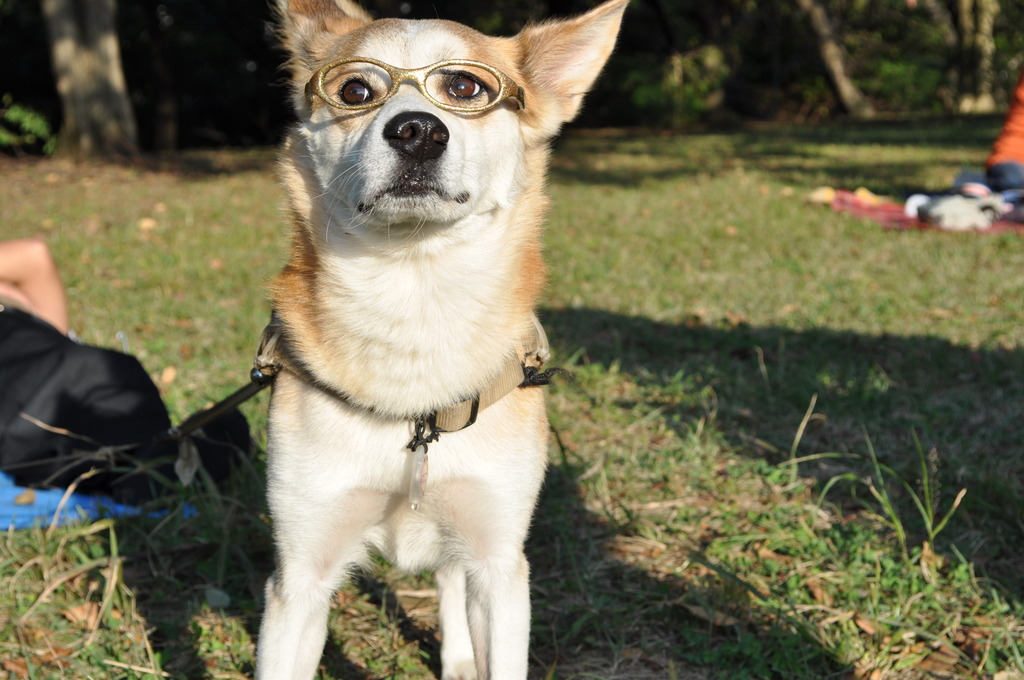 「犬」×「メガネ」