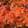 談山の秋色