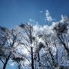 樹氷・・・・ガラスの樹