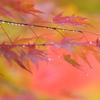 雨上がりの秋