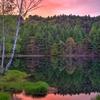 朝焼けに染まる池