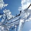 樹氷・・・・曲線美