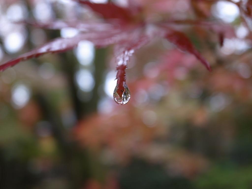 雨の平林寺