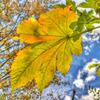 色づく葉と高い空