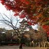 秋の犬山城1