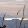 ススキと輝く海