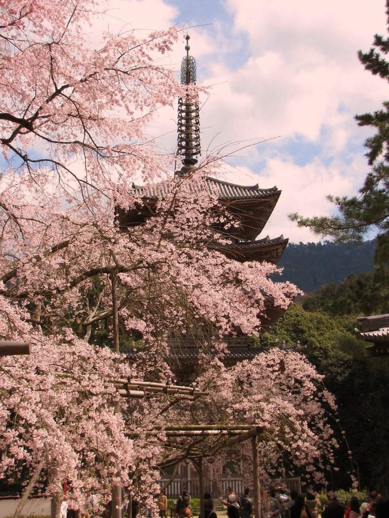 2009京都 醍醐寺01