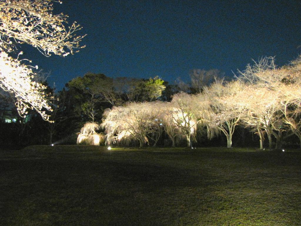2009京都 二条城06