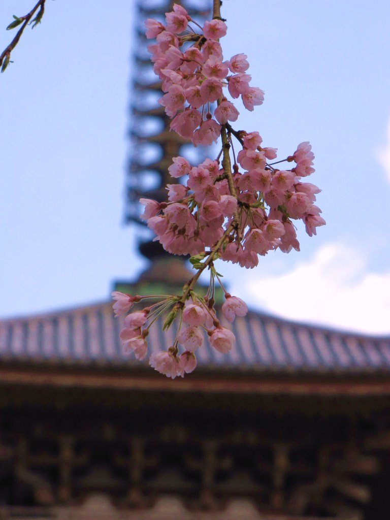 2009京都 醍醐寺02